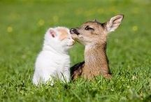 rostomilí  obrázky se zvířátky
