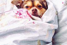 Sweet New York Puppies