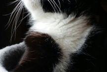 lindos gatod