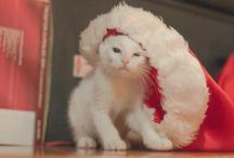 CAT / 猫 / にゃんこ / かわいらしい猫画像です。