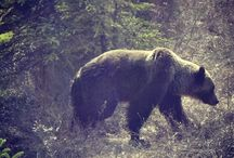 Wildlife / wildlife encountered on my travels