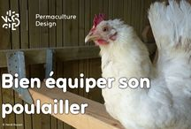 Permaculture : Animaux