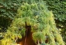 tiny natural hut