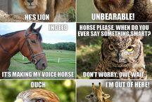 Funnies Animals
