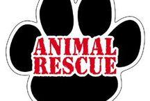 Let's Speak For the Animals / by Elizabeth Christian