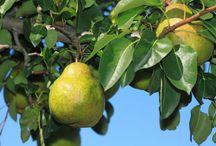 garden&obst fruit *sonne