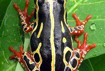 Beautiful Amphibians