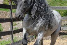 Animais / Cavalos