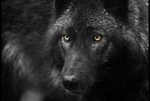 Wolf / Beautiful & Interesting Wolves / by Heather Marie