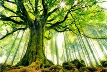 Nature / Beautiful pictures and some memes about our Earth Mama / by Kendra Bratzel