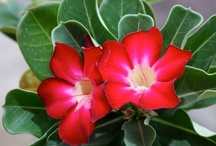 The Beautiful Blooms of Oleander Acres RV Resort