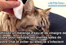 remèdes pour chat