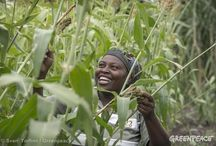Ecological Farming in Africa / Greenpeace calls it ecological farming, and it would not only feed Africa's people but also maintain livelihoods, alleviate poverty, and prevent the corporate takeover of agriculture currently happening across the continent. / by Greenpeace Africa