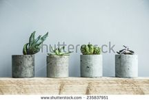 Scandinavian / Succulent / Cactus / Home Decorations