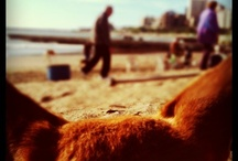Vamos a la playa <3 / a day at the beach restores the soul* / by Chelsea Merchan