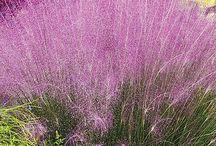 Small windswept garden ideas