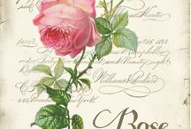 vintage ruusu