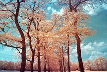 Nature ☼