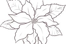 Poinsettia mikulas virag