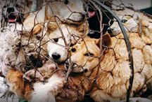 Stop Killing Dogs in all Countries!