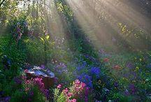 Fények a kertben/Garden sunshine