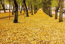 Autumn Höst