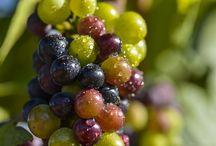 FAMILIA TORRES | #Grape