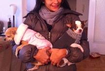 Mascotas / Son la alegria de la casa y de toda la familia,son incondicionales!!!!!!!!!!!!
