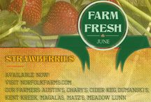 Ontario's Garden Farm Fresh / Your up to date resource on what's in season locally and where to get it! / by Norfolk Tourism