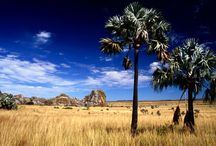 Madagascar / by ✈ 100 places to visit before you die