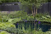 Ponds and water gardening / Easy ways to bring water into any garden