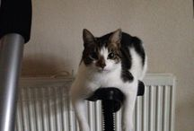 My Beautiful Cats  / Three beautiful cats.  Charlie  Alfie  Thor