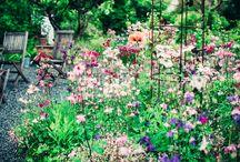 B V 7 5 | garden