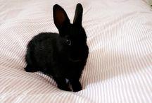 bunny mania