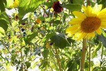 Garden Ideas / by Cheryl Emerson