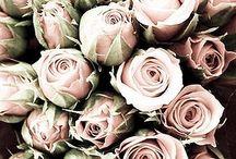 ✚ Flowers ✚