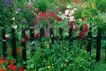 Barnsdale Gardens UK / 38 Showgardens in Barnsdale near oakham UK