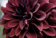 Flowers 4 / by Dawn Wilson