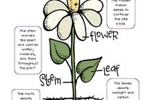 SCIENCE: Botany For Beginners / Visual and/or Kinesthic lessons to learn about plants and botany