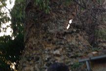 Poggio Murella (Saturnia) / A poca distanza da Saturnia, in un luogo che ospitava diverse ville dell'epoca romana