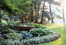 Garden / by Cel Ega