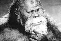 BigFoot News and Informations