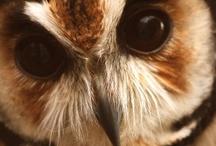 Owl my god!