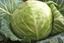 Lacto-Fermented Vegetables