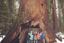 Calaveras Big Trees State Park / by CA State Parks