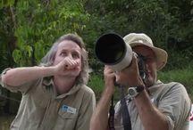 Film: Jambo Tours på Borneo / Borneo, en plats som få platser kan mäta sig med på vår jord. Här kan du uppleva en fantastisk natur och ett spännande djurliv.