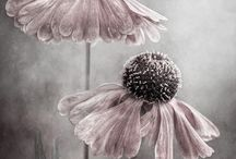 Fabulous Flora / Plant portraits and stunning flower photography.
