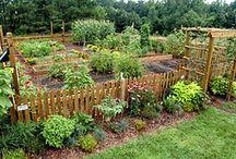 Gardening / by Katherine Agus