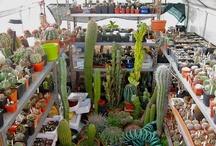 My house, greenhouse and cactus / La mia serra e le mie piante