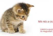 Cicás kirakósok - cat / kitten puzzle games / Kedves cicás képek, melyekből kirakós (puzzle) játék található a cicaelet.hu weboldalon.  Adorable cat - kitten pictures, what you can puzzle on cicaelet.hu website.